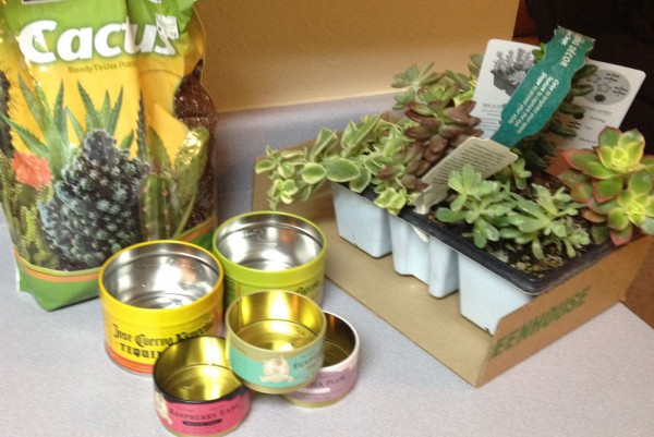 succulent-planting-materials