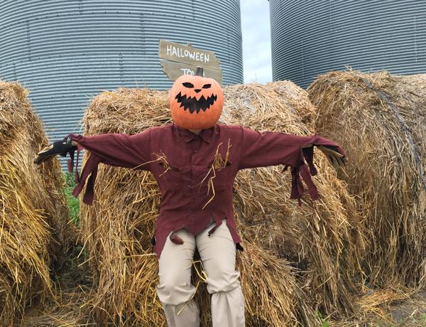 halloween-town-scarecrow-costume-diy-2